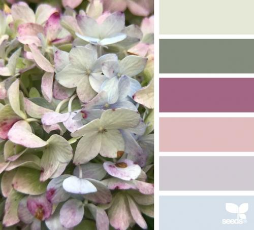 Nyár típus színei